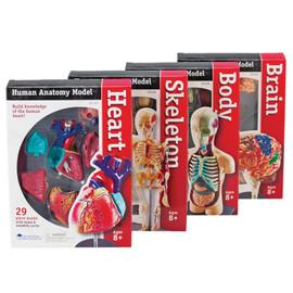 Model Anatomy (Heart,Skeleton, Body, Brain) Set