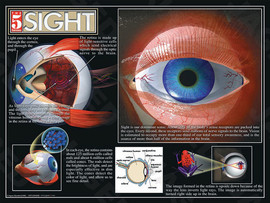 Single poster has details and anatomy of the eye in regard to sight and how it it works