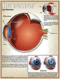 03-PS01-7 Eye Disorder