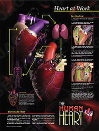 How the heart works poster image