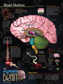 03-PS04-1  Brain Matters
