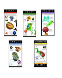 Kingdoms of Life Series of 5
