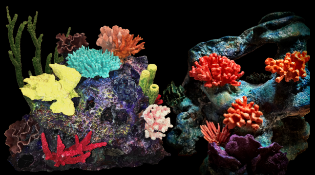 coralgrouping.png