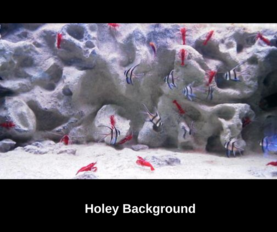 holeyquariumbackground.png