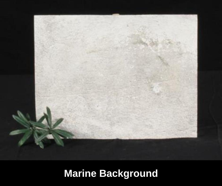 marinequariumbackground.png