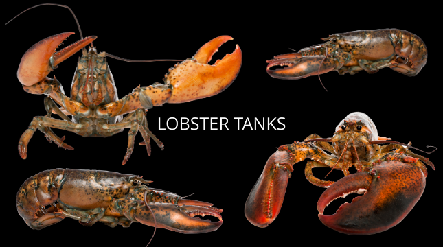 Lobster Tanks