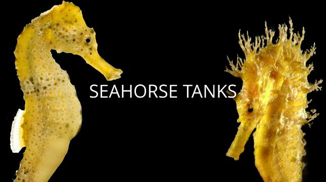 Seahorse Tanks