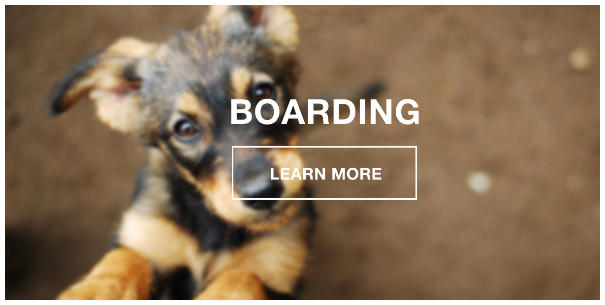 K9 Loft Boarding