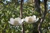 Double Magnolia Bird Feeder