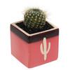 Arizona Cactus Cube (Multiple Colors)