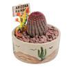Desert Rainbow Cactus
