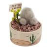Silver Petting Cactus