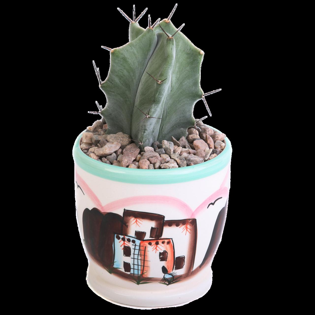 Cactus Cups - 2 inch