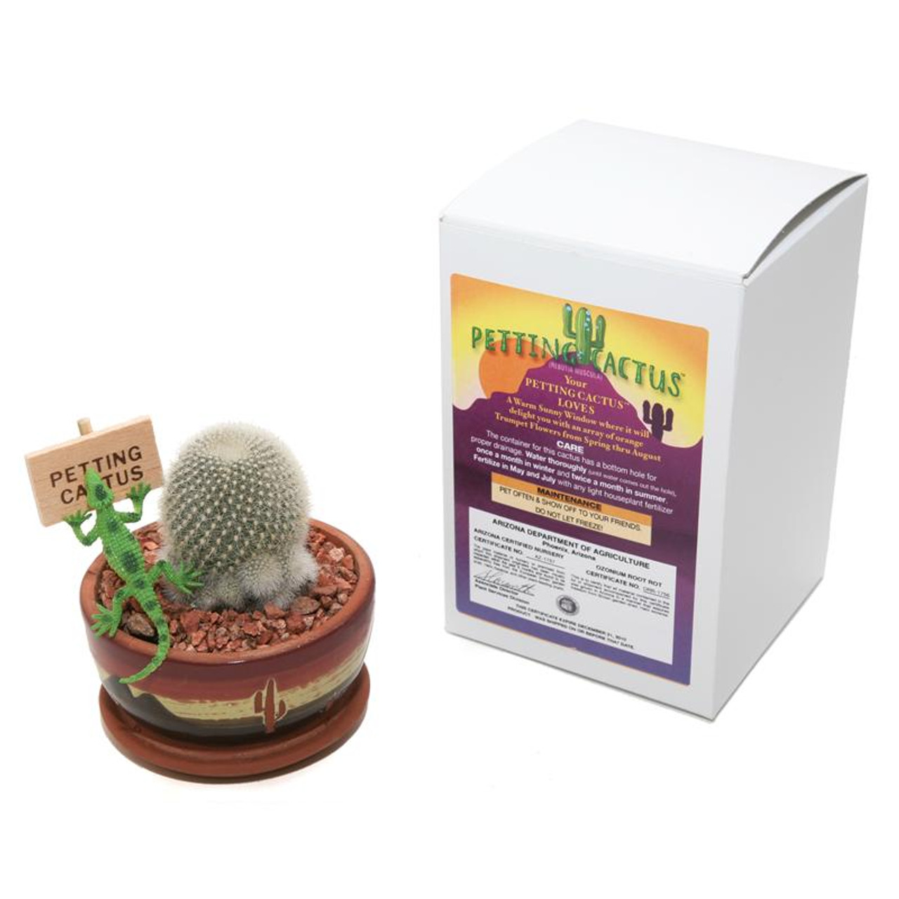 Petting Cactus Silver - 3.5 inch