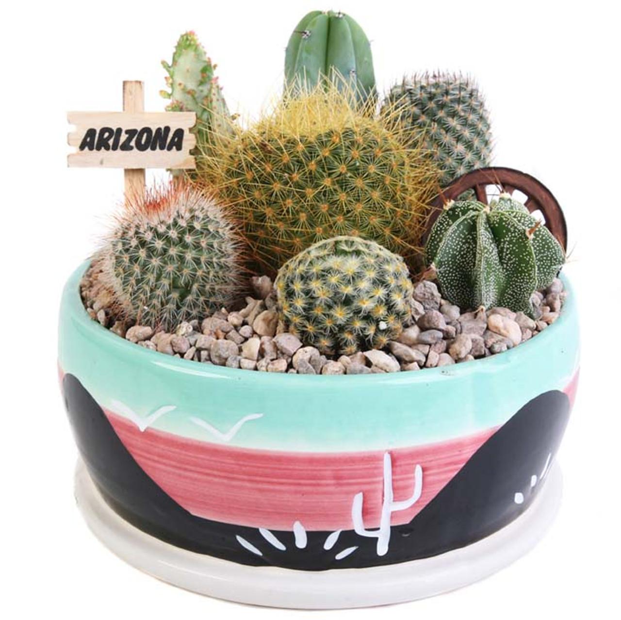 Cactus Garden - 6 inch