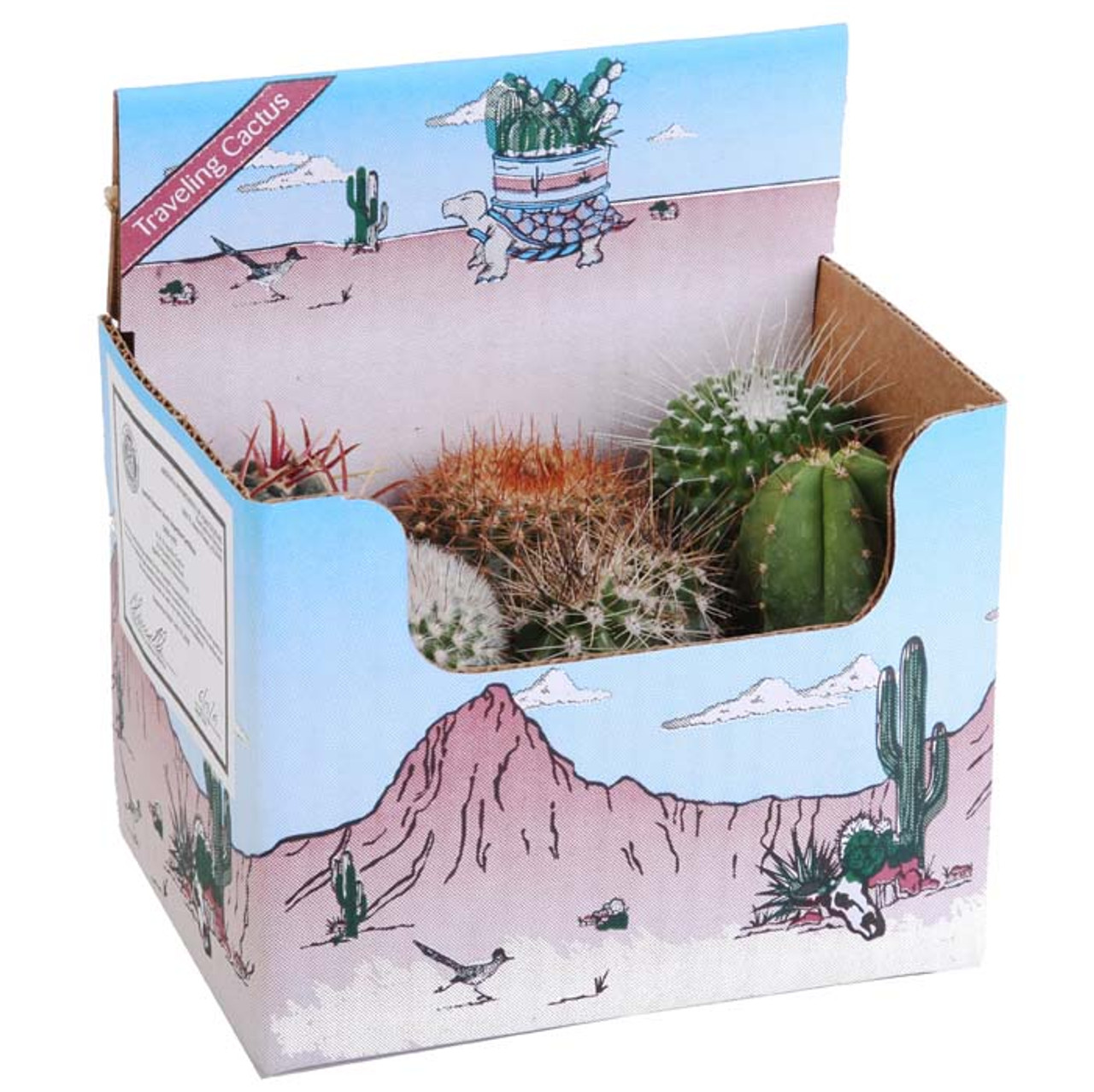 Cactus Travel Kit-without Pottery