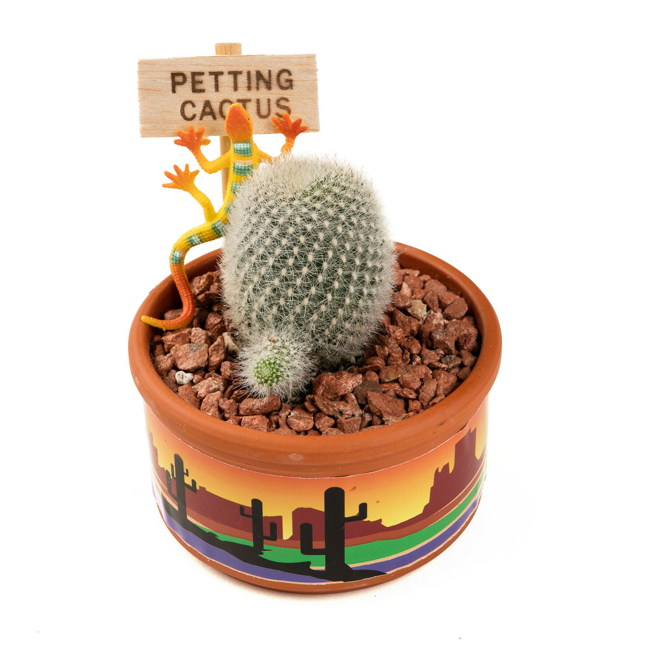 Petting Cactus - The Buttes - 3.5 inch