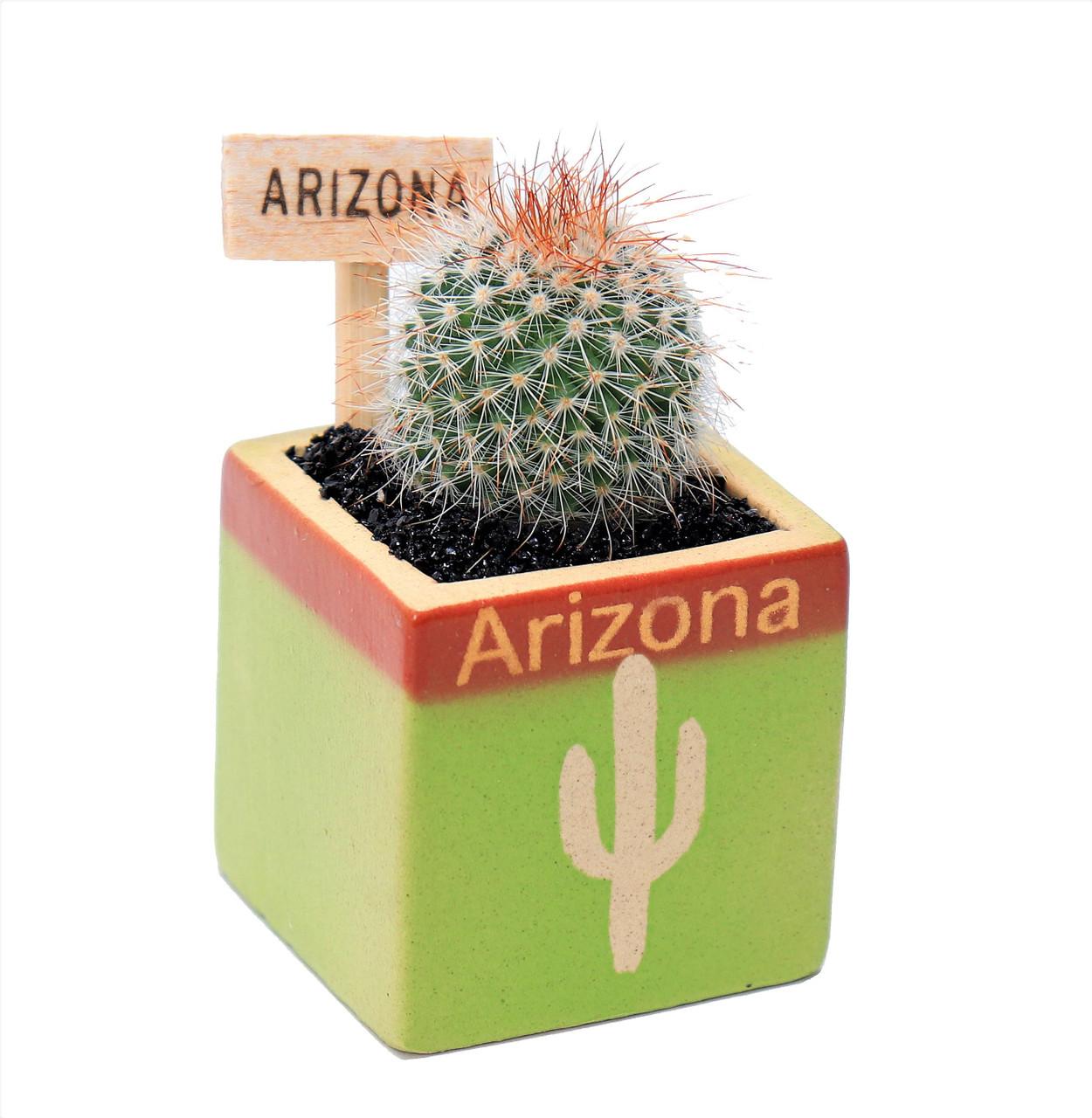 Arizona Cactus Green Cube