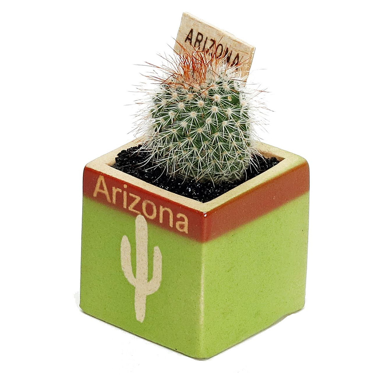 Arizona Cactus Green Cube