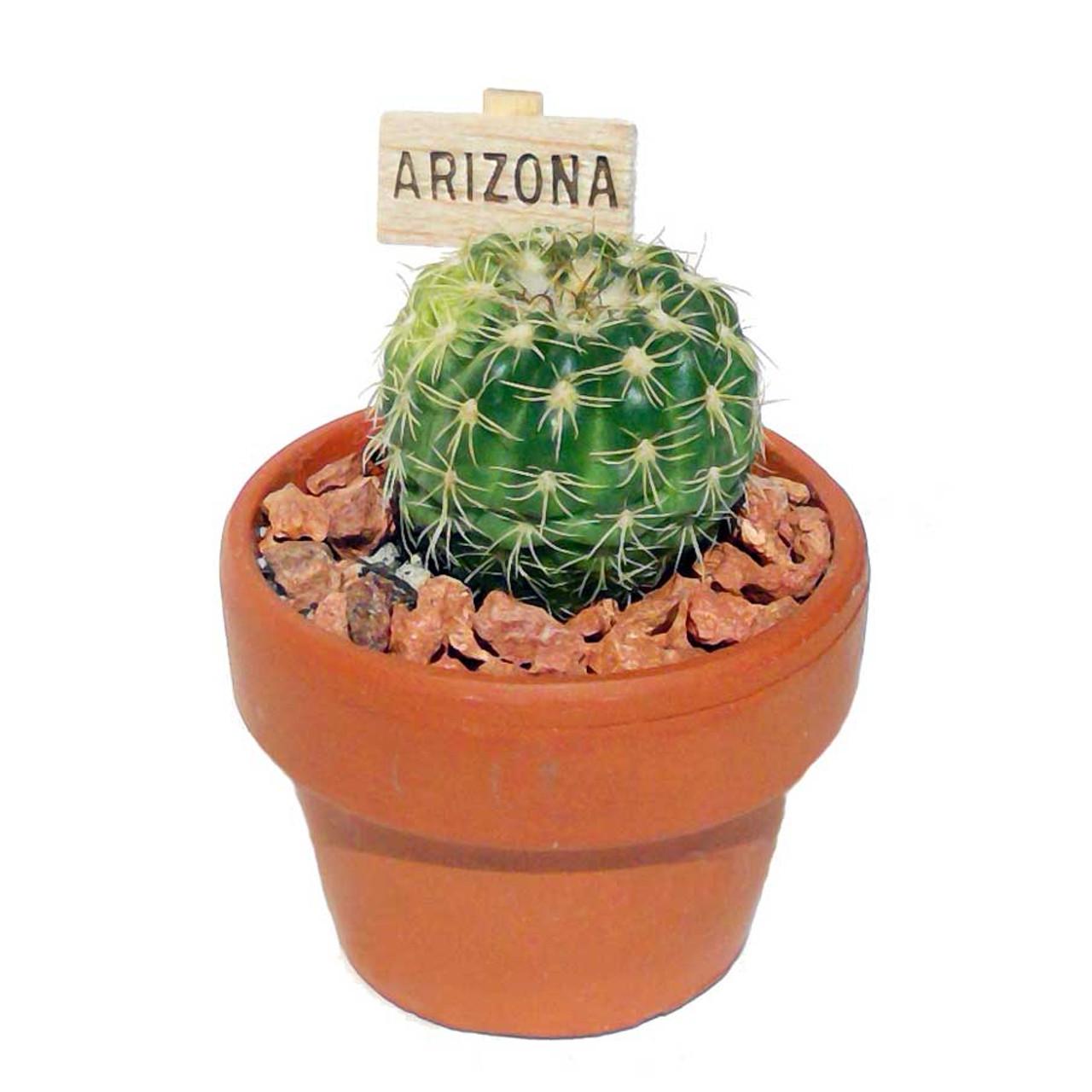 Cactus in TerraCotta
