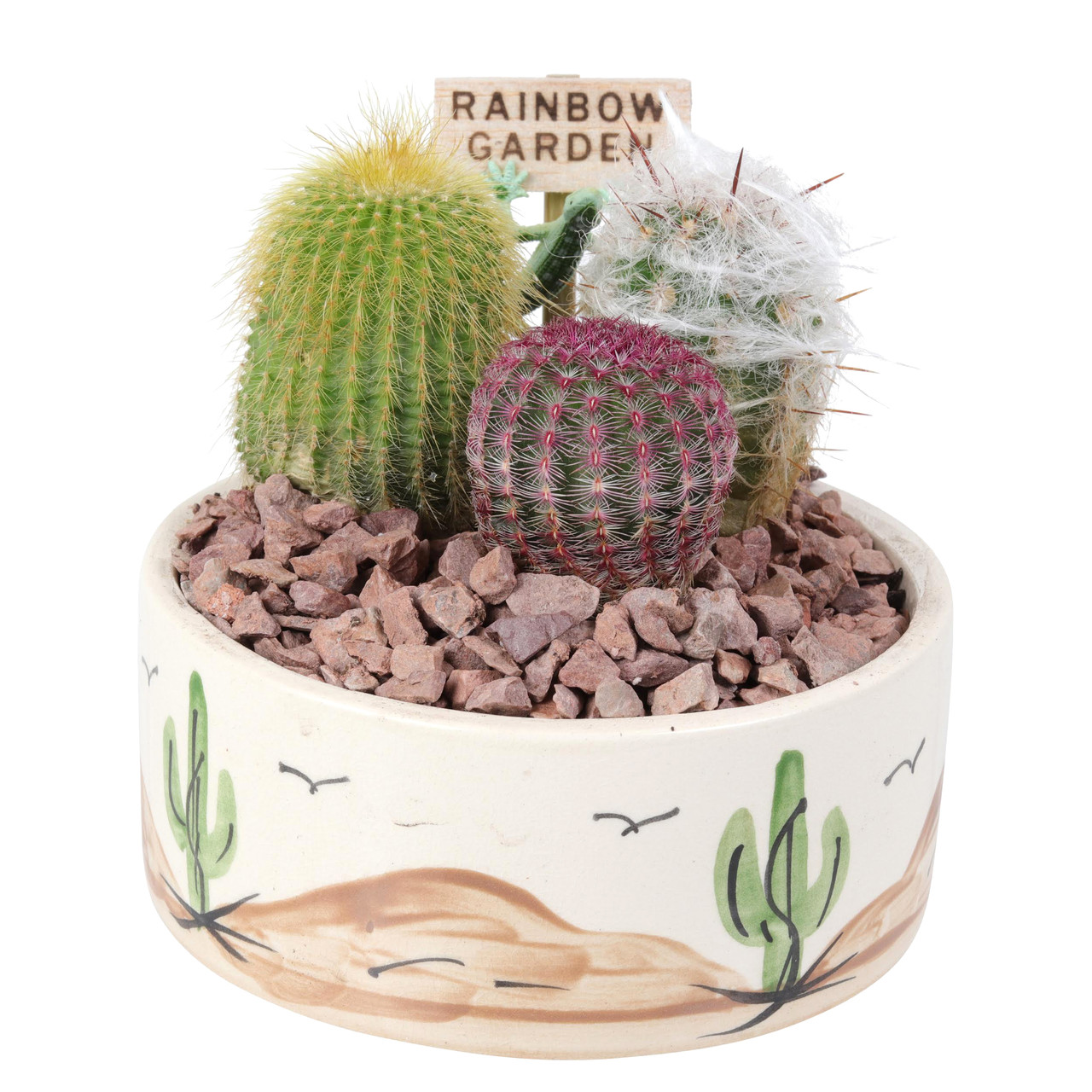 Desert Rainbow Garden
