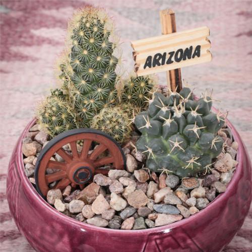 Southwest Cactus Garden - 4 inch