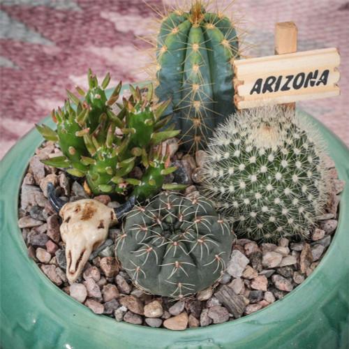 Southwest Cactus Garden - 5 inch