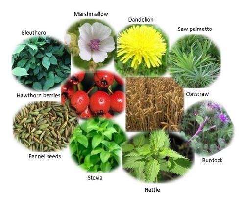 Men's Daily Herbal Tea Blend