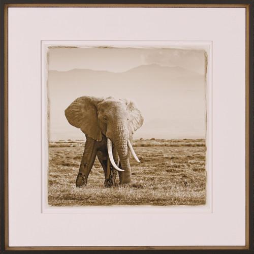 African Safari Collection