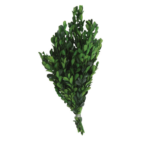 Dried Natural Boxwood Stems