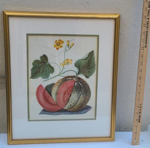Antique George Brookshaw Print Melon Pomona Britannica Fruits Great Britain