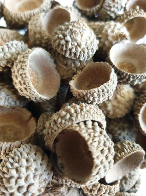 Dried Acorn Caps - Decorative - Pot Pourri - 200g Bag - Natural