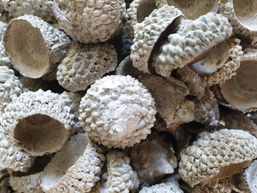 Acorn Caps - Pot Pourri - Decorative - 200g Bag - White Washed