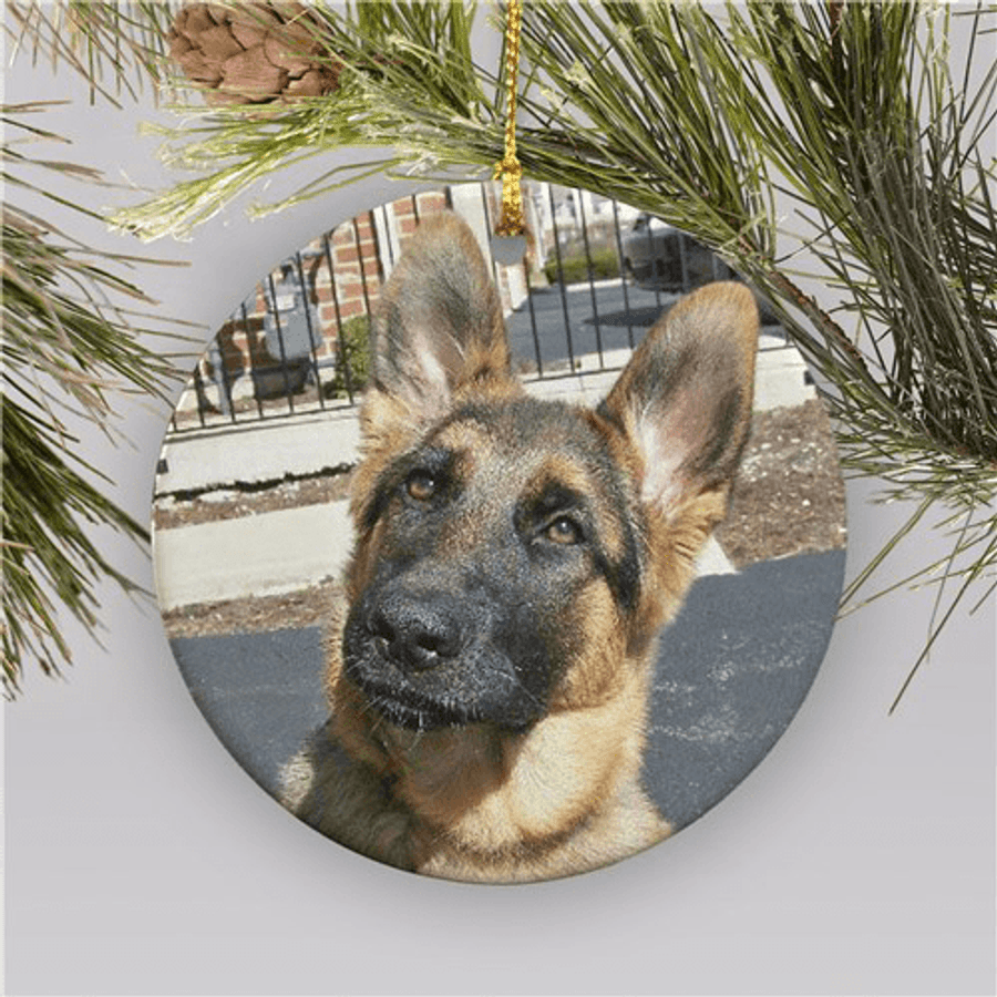 Photo ornament for any special family member, especially the furry ones!