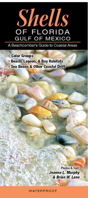 Shells of Florida-Gulf of Mexico Folding Pocket Guide