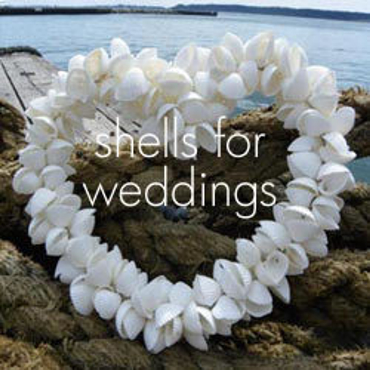 Wedding Shells