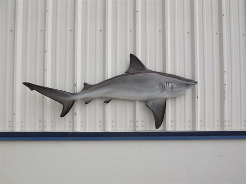 "67"" Bull Shark Half Mount Fish Replica"
