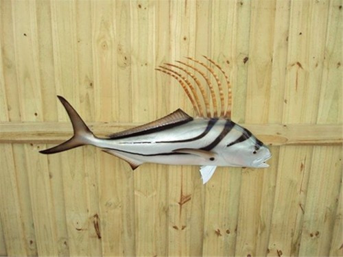 "55"" Roosterfish Half Mount Fish Replica"