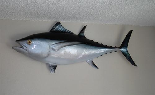 """38"""" Albacore Tuna Half Mount Fish Replica"""