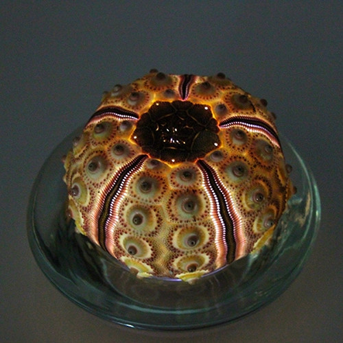Sea Urchin Tea Light Flicker Flameless LED Battery Operated