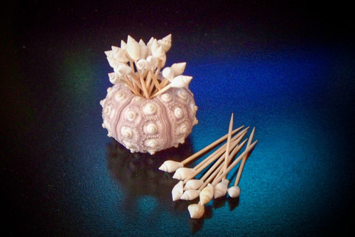 All White Shell Toothpicks with Urchin Holder (Case Pack 100) Free Shipping