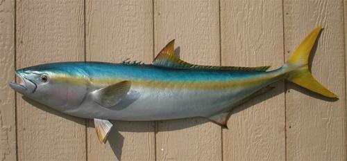 California Yellowtail Half Mount Fish Replica 39""