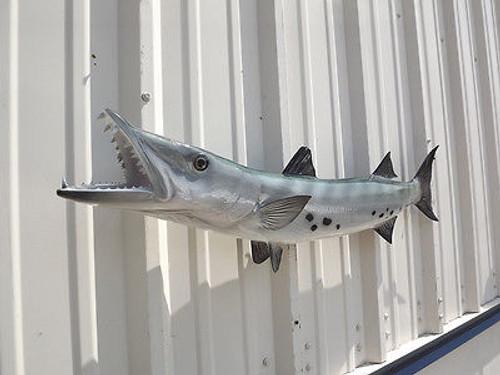 "Barracuda Half Mount Fish Replica 49"""