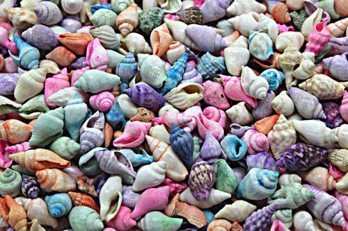 200 Pastel Dyed Nassa Shells Craft beach decor Best Seller