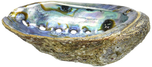 LARGE Paua Green Abalone Seashell Smudging Sea Shell
