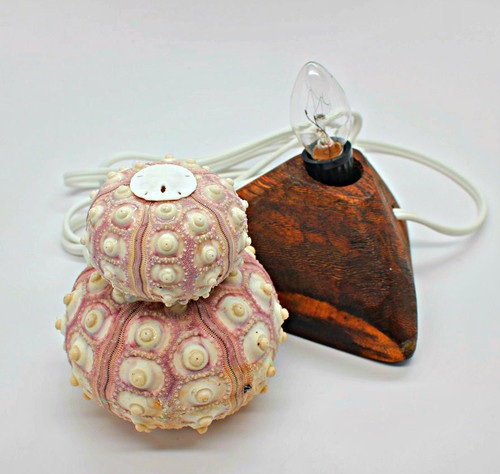 Double Sea Urchin Lamp with Sandollar topper Free Shipping