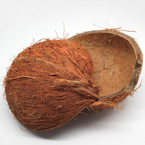 Natural Coconut 1/2 Shell (Case pack 2) Free Shipping
