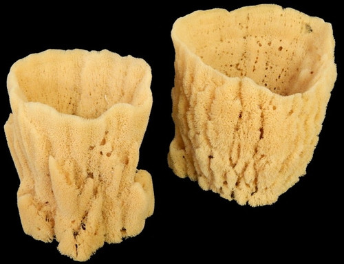 "Natural Vase Sponge (Case Pack 1) Various sizes 7""-8"""