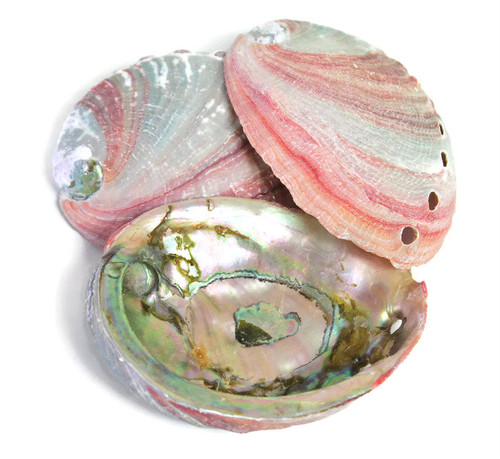 Red Abalone Shells Priced each Great smudge shells