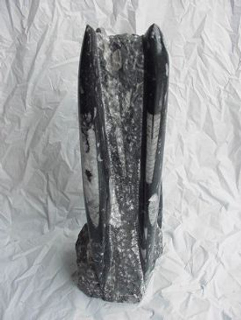 Fossil Orthoceras Statue from Morocco 7-8 INCH tall free Shipping